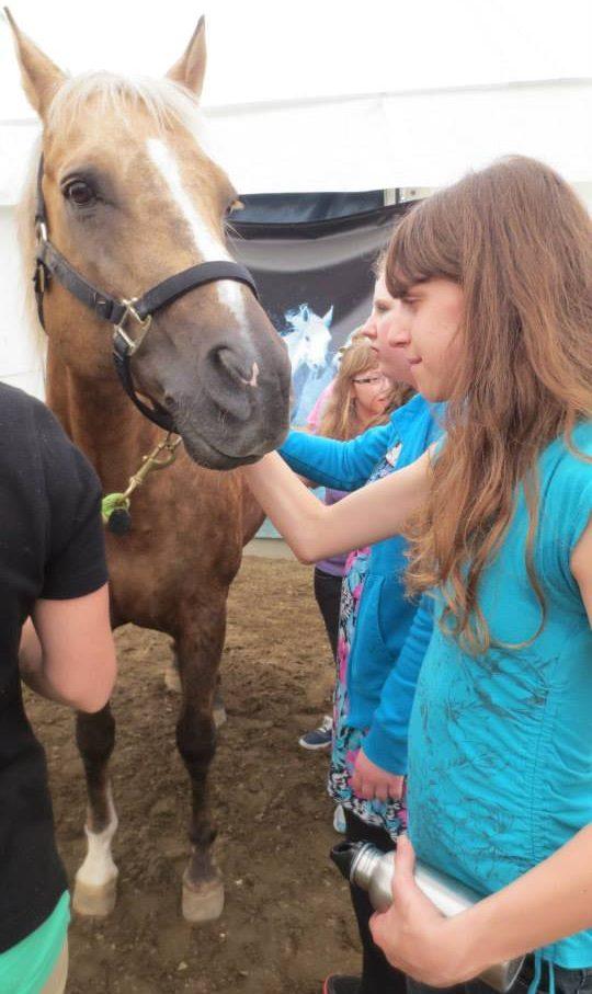 Visite à Cavalia - toucher un cheval