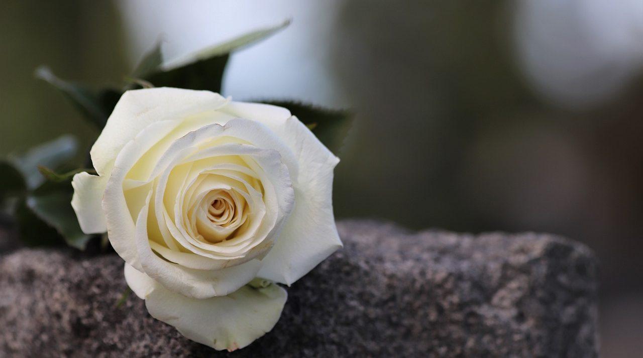 Faire un don - Don en mémoire - rose blanche sur roche